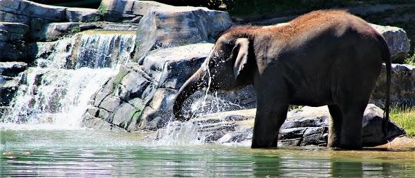 Foto di Rosamond Gifford Zoo di Syracuse  Onondaga County  New York  Stati Uniti d America