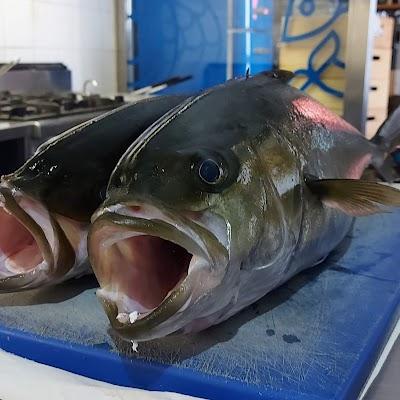 Foto di Ciard%F2 cucina di mare di Pontecagnano  Pontecagnano Faiano  Salerno  Campania         Italia