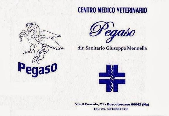 Foto di Centro Medico Veterinario PEGASO di Torre Annunziata  Napoli  Campania         Italia