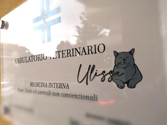 Foto di Ambulatorio Veterinario Ulisse dr.ssa Vania Pisani di Somma Vesuviana  Napoli  Campania         Italia